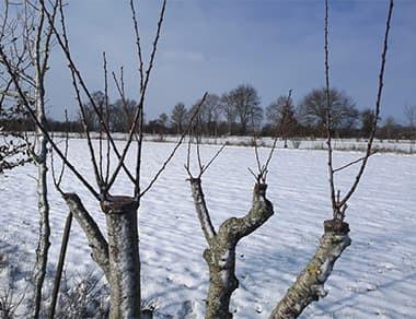 L'hiver est là !